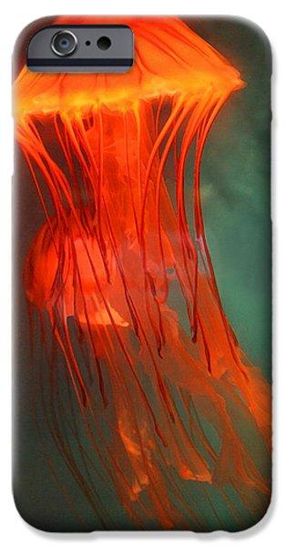 Orange Jellies iPhone Case by Ellen Henneke