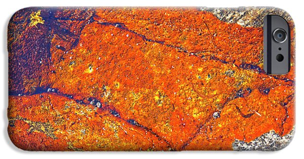 Lichens iPhone Cases - Orange lichen iPhone Case by Heiko Koehrer-Wagner