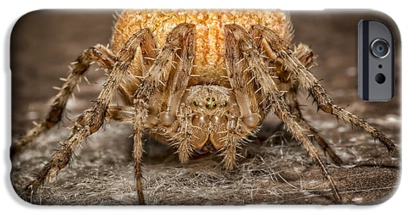 Orb iPhone Cases - Orange Marbled Orb Weaver iPhone Case by Adam Romanowicz