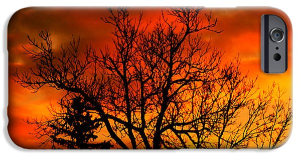 Pines Mixed Media iPhone Cases - Orange Morning iPhone Case by Marjorie Imbeau