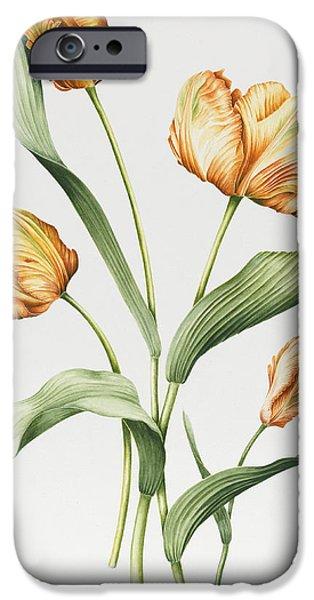 Range iPhone Cases - Orange Parrot Tulips iPhone Case by Sally Crosthwaite