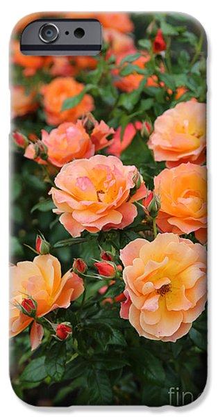 Oslo iPhone Cases - Orange Roses iPhone Case by Carol Groenen