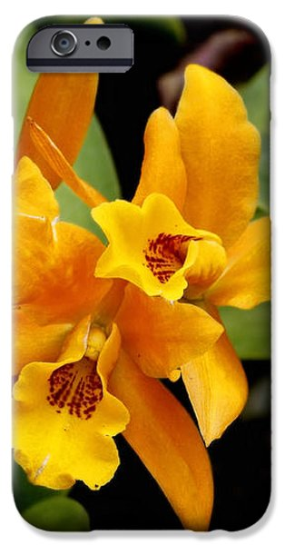 Orange Spotted Lip Cattleya orchid iPhone Case by Rudy Umans
