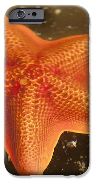 Orange Starfish in California Ocean iPhone Case by Artist and Photographer Laura Wrede