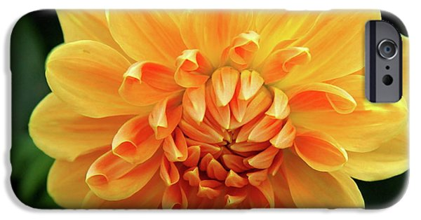 Bloosom iPhone Cases - Orange Sun iPhone Case by Christiane Schulze Art And Photography