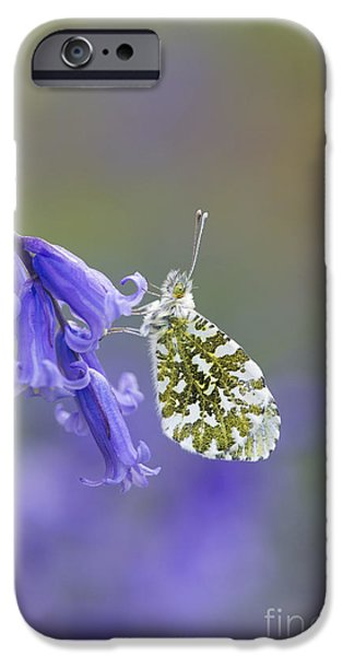 Fauna iPhone Cases - Orange Tip Butterfly iPhone Case by Tim Gainey