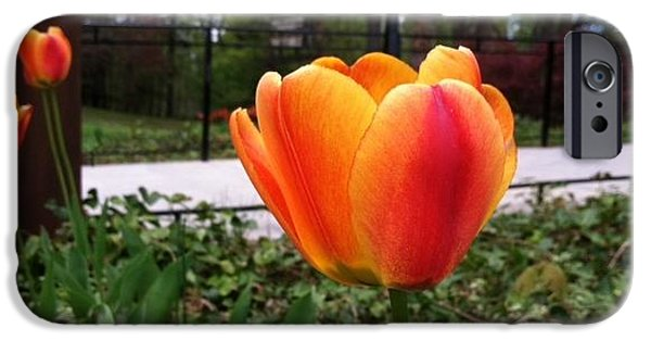 Ridgewood iPhone Cases - Orange Tulip iPhone Case by Sandra Spincola