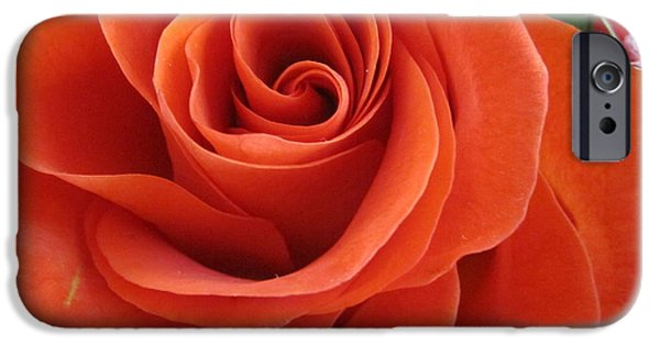 Flora Drawings iPhone Cases - Orange Twist Rose 2 iPhone Case by Tara  Shalton