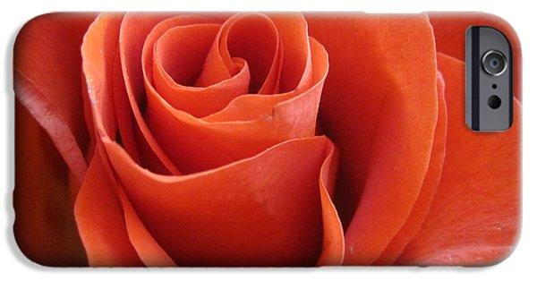 Flora Drawings iPhone Cases - Orange Twist Rose iPhone Case by Tara  Shalton