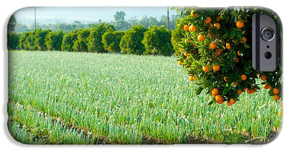 Crops iPhone Cases - Oranges On A Tree With Onions Crop iPhone Case by Panoramic Images