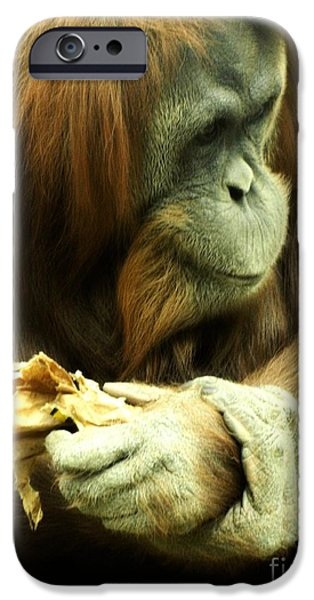 Orangutan Digital Art iPhone Cases - Orangutan iPhone Case by Michelle Frizzell-Thompson