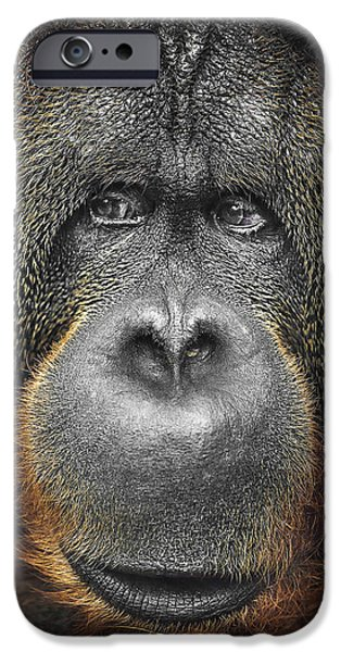 Orangutan iPhone Case by Svetlana Sewell