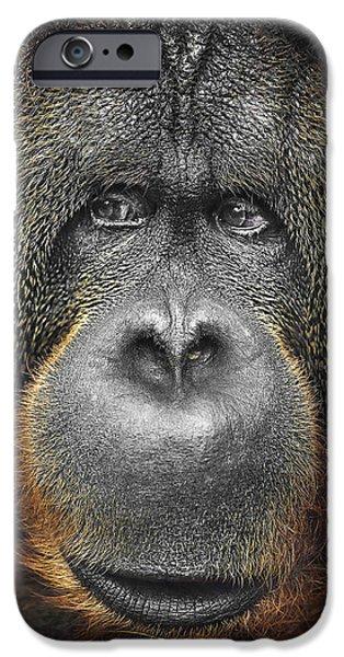 Orangutan iPhone Case by Svetlana Sewell