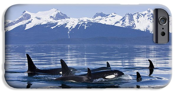 Inside Passage iPhone Cases - Orca Surface In Lynn Canal Near Juneau iPhone Case by John Hyde