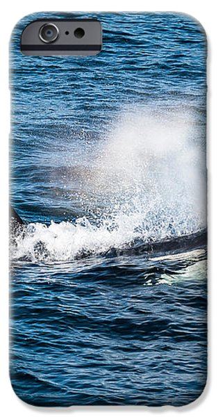 Orca Whale on the move iPhone Case by Puget  Exposure