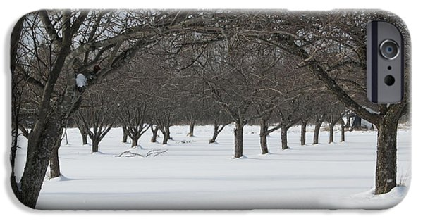 Popular iPhone Cases - Orchard At Rest iPhone Case by Barbara Royer