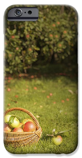 Fruit Basket iPhone Cases - Orchard iPhone Case by Amanda And Christopher Elwell
