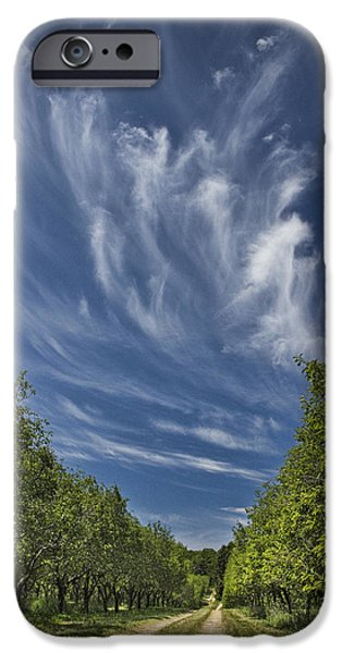 Tree Art Print iPhone Cases - Orchard Road in West Michigan with Cirrus Clouds  iPhone Case by Randall Nyhof