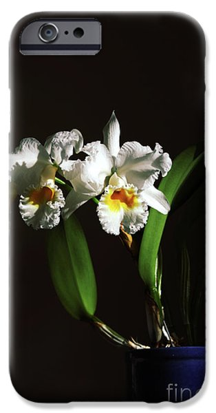 Cattleya iPhone Cases - Orchid Cattleya Bow Bells iPhone Case by Charline Xia