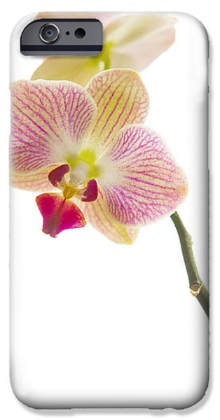 Tropical Plant iPhone Cases - Orchid iPhone Case by Diane Diederich