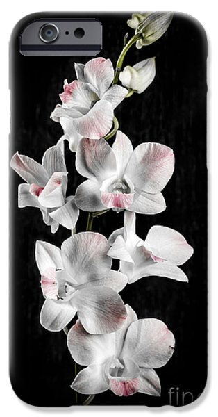 Botanical Photographs iPhone Cases - Orchid flowers on black iPhone Case by Elena Elisseeva