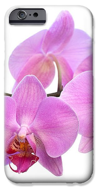 Orchid Flowers - Pink iPhone Case by Natalie Kinnear
