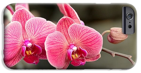 Phalaenopsis iPhone Cases - Orchid - It takes two to tango iPhone Case by Mike Savad