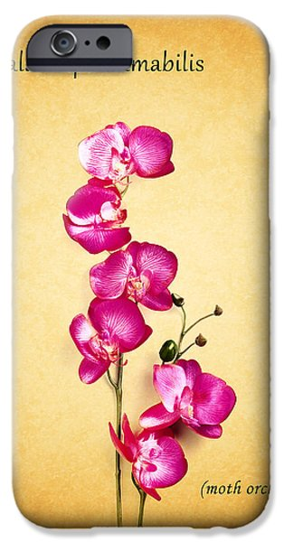 Phalaenopsis iPhone Cases - Orchid iPhone Case by Mark Rogan