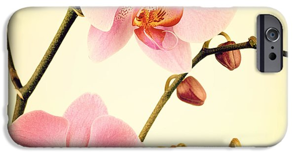 Fashion Design Art iPhone Cases - Orchid old photo iPhone Case by Jane Rix