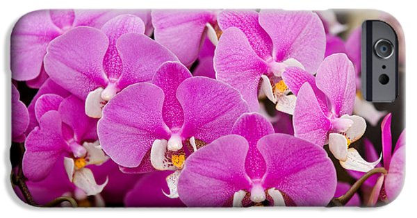 Phalaenopsis iPhone Cases - Orchid -  Phalaenopsis - Tickled pink iPhone Case by Mike Savad