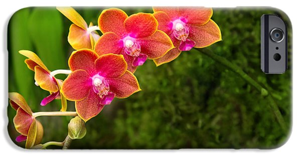 Phalaenopsis iPhone Cases - Orchid - Phalaenopsis - Tying Shin Cupid iPhone Case by Mike Savad