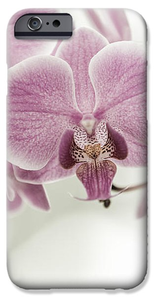 orchid pink vintage iPhone Case by Hannes Cmarits