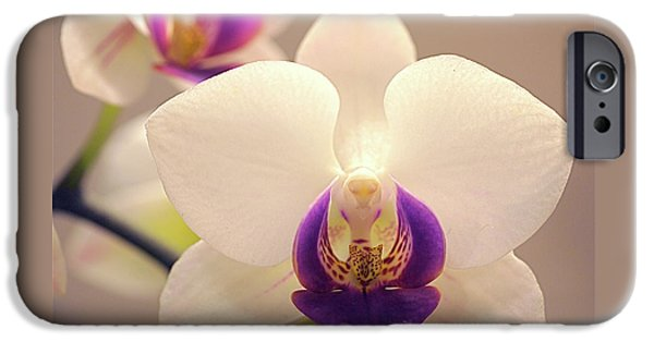 Phalaenopsis iPhone Cases - Orchid iPhone Case by Rona Black