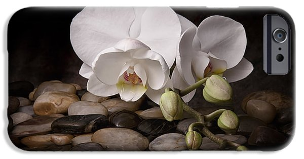 White Orchid iPhone Cases - Orchid - Sensuous Virtue iPhone Case by Tom Mc Nemar