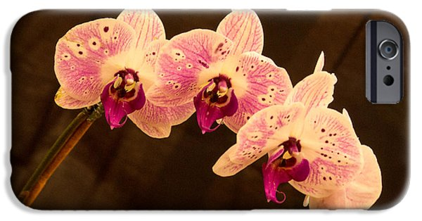 Willow Lake Photographs iPhone Cases - Orchid Triad 2 iPhone Case by Douglas Barnett