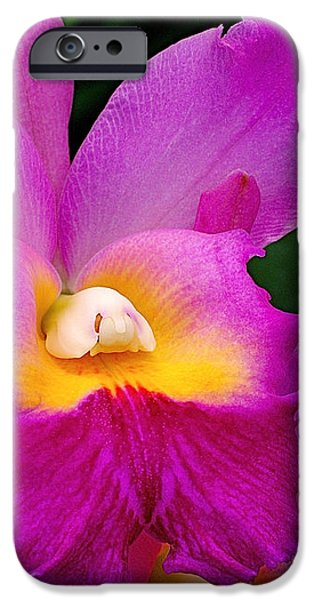 Orchid Variations 1 iPhone Case by Rona Black