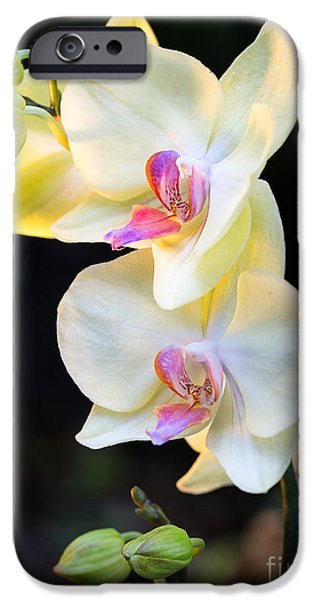 Close Up Floral Pyrography iPhone Cases - Orchids 2 iPhone Case by Eyzen M Kim