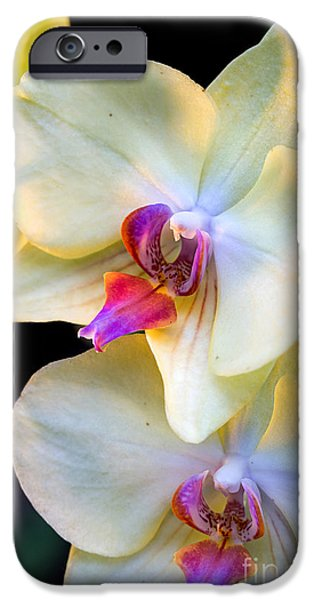 Close Up Floral Pyrography iPhone Cases - Orchids iPhone Case by Eyzen Medina