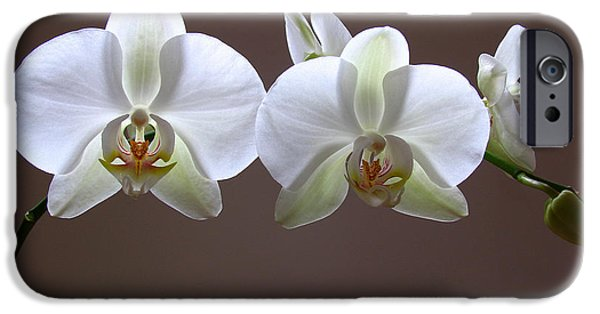 White Orchid iPhone Cases - Orchids Illuminated iPhone Case by Juergen Roth