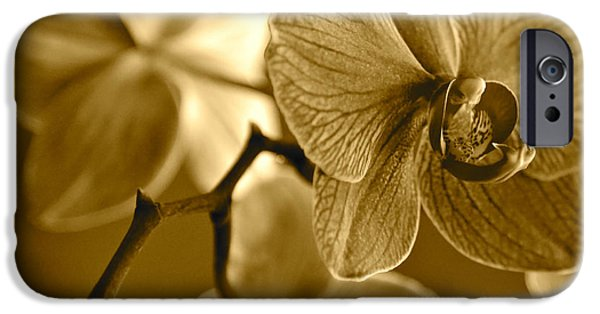 Sepia Flowers iPhone Cases - Orchids in Sepia iPhone Case by Carol Groenen