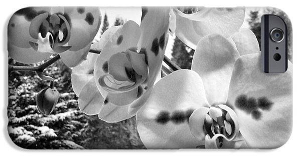 Pines Mixed Media iPhone Cases - Orchids in Winter iPhone Case by Heather L Giltner