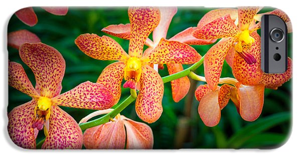 Buddhism Photographs iPhone Cases - Orchids iPhone Case by Inge Johnsson