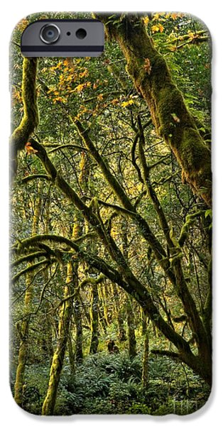 State Parks In Oregon iPhone Cases - Oregon Rainforest Green iPhone Case by Adam Jewell