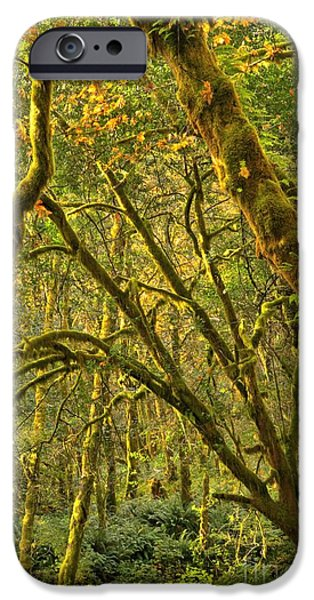 State Parks In Oregon iPhone Cases - Oregon Rainforest Portrait iPhone Case by Adam Jewell
