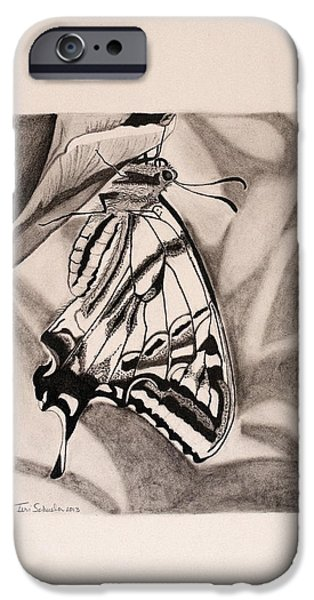 Macro Drawings iPhone Cases - Oregon Swallowtail Butterfly  iPhone Case by Teri Schuster