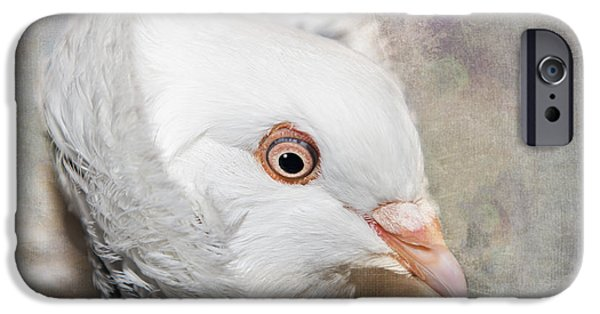 Pigeon iPhone Cases - Oriental Frill Pigeon iPhone Case by Betty LaRue