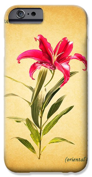 Oriental iPhone Cases - Oriental Lily iPhone Case by Mark Rogan