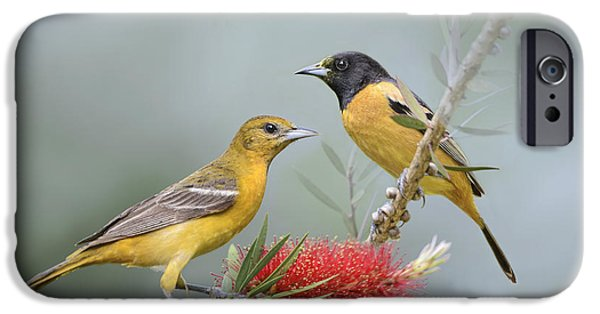 Oriole iPhone Cases - Orioles iPhone Case by Bonnie Barry