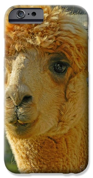 Llama Digital iPhone Cases - Orion The Alpaca 2 iPhone Case by Emmy Marie Vickers