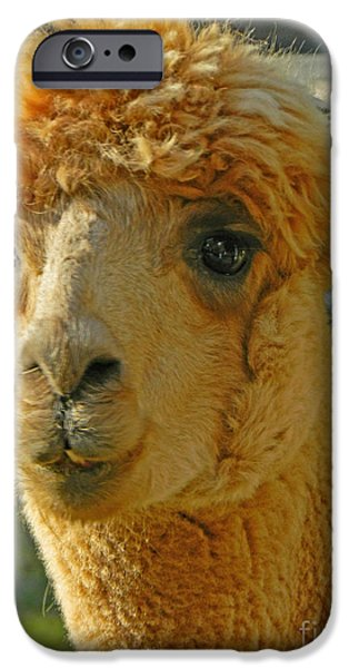 Llama Digital iPhone Cases - Orion The Alpaca iPhone Case by Emmy Marie Vickers